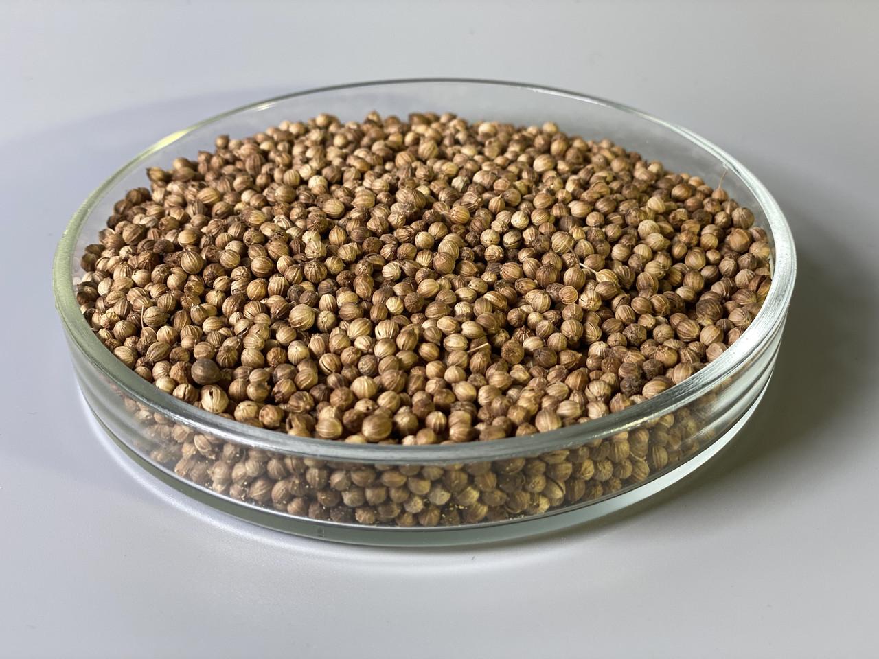Кориандр семена микрогрин экосемена microgreens seeds  non gmo certified Вес 1 кг