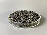 Соняшник насіння мікрогрін экосемена microgreens seeds non gmo certified Вага 1 кг