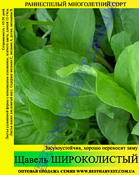 Семена щавеля «Широколистный» 10 кг (мешок)