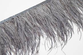Перья страуса на ленте 10-15 см, перьевая тесьма из натуральных перьев светло серого цвета. Цена за 0,5 м., фото 2