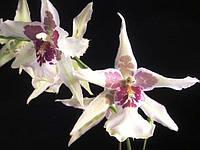 """Вырубка для мастики """"Орхидея онцидиум"""" 2шт(код 01636)"""