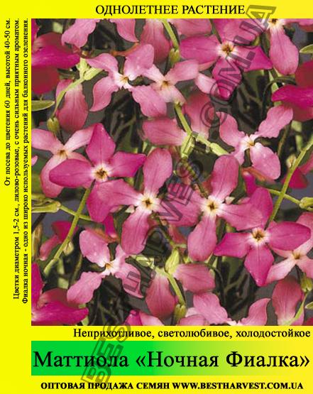 Семена Маттиола «Ночная Фиалка» 10 кг (мешок)