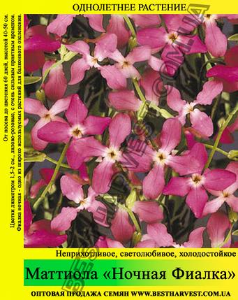 Семена Маттиола «Ночная Фиалка» 10 кг (мешок), фото 2