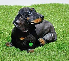 Садовая фигура собака Такса, фото 3