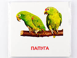 Набор карточек Птицы (укр/англ) 16 штук 11х11 см, Зірка (72753)