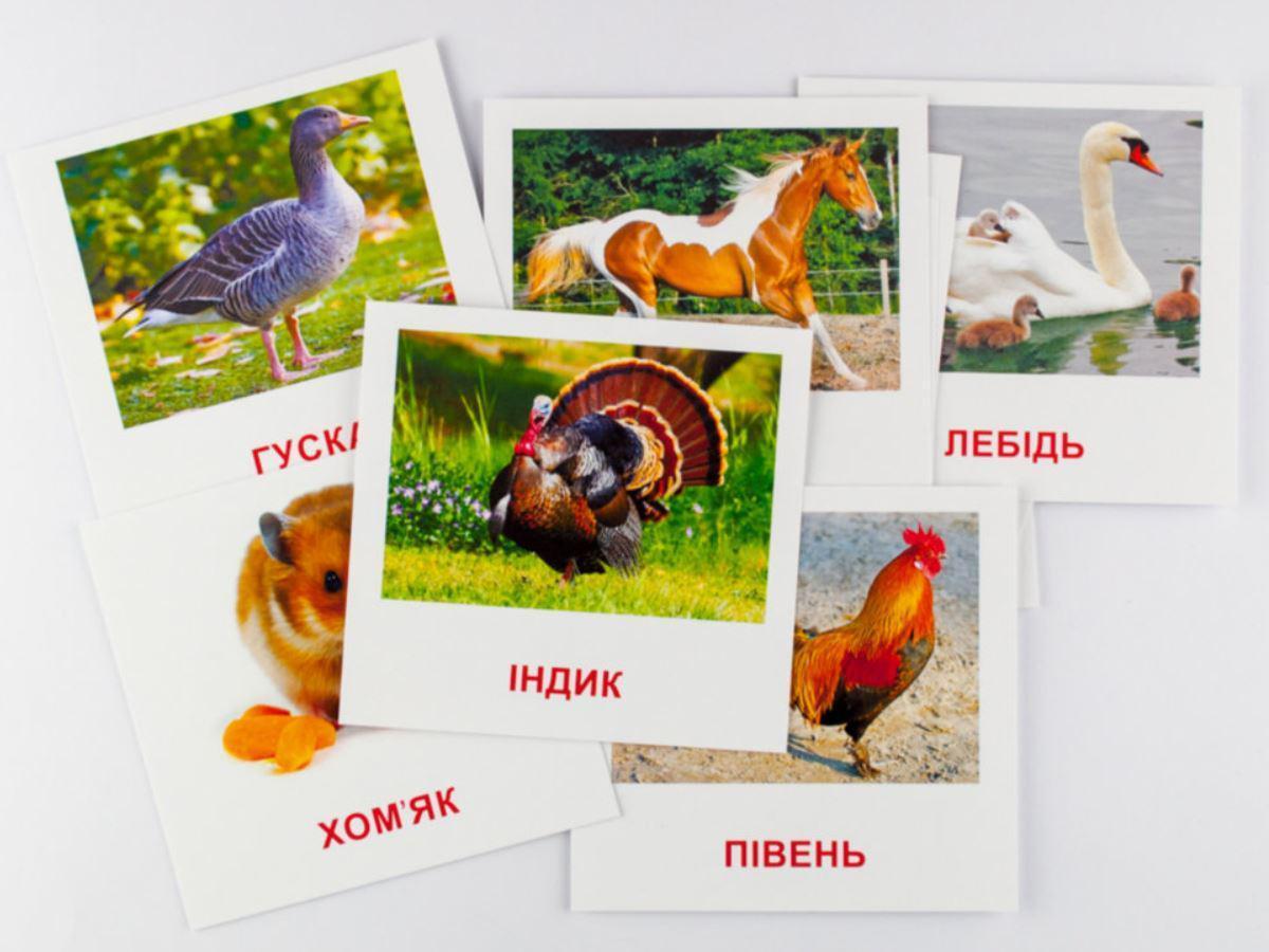 Набор карточек Домашние животные (укр/англ) 16 штук 11х11 см, Зірка (65945)