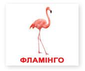 Карточки Домана Птицы (укр), Вундеркинд с пеленок (КД-96532)