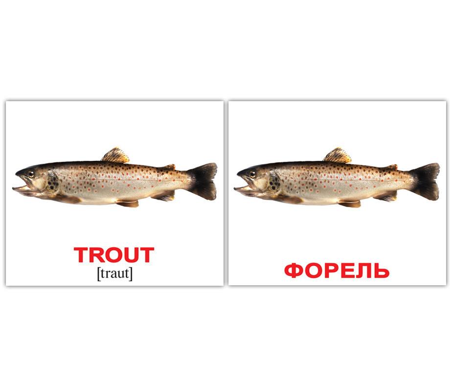 Карточки Домана Водные животные Water animals англо-русские мини-карточки, Вундеркинд с пеленок (КД-55317)