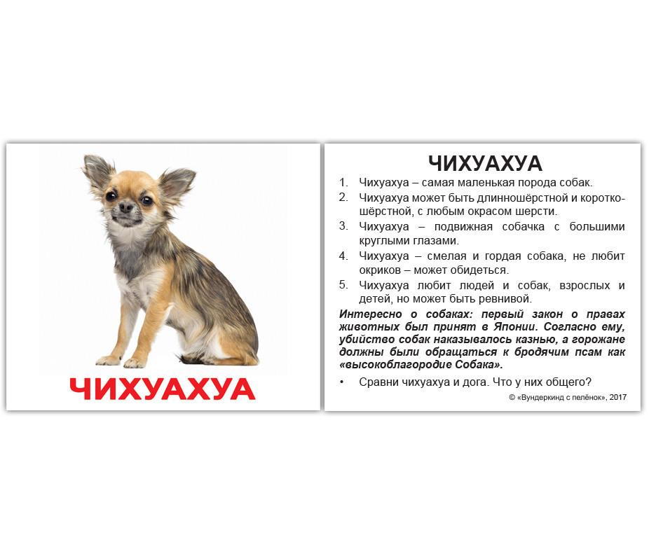 Карточки Домана Породы собак мини-карточки с фактами (рус), Вундеркинд с пеленок (КД-77317)