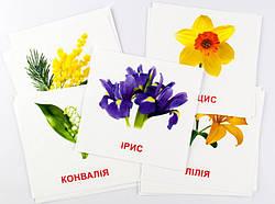 Набор карточек Цветы (укр/англ) 16 штук 11х11 см, Зірка (72754)