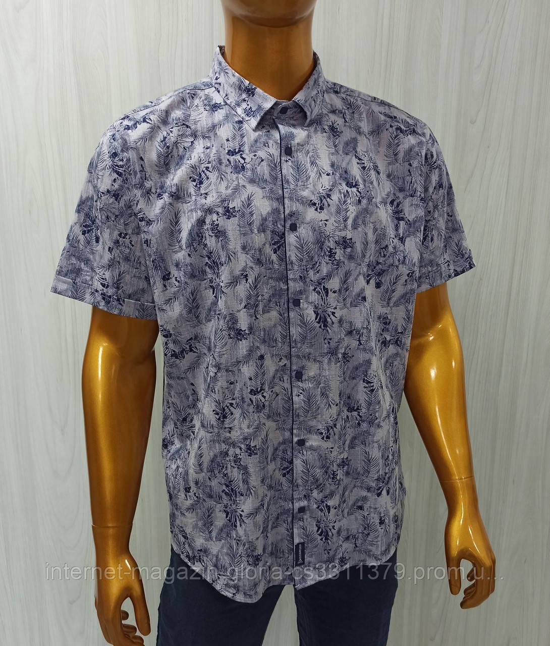 Мужская рубашка Amato. AG.20001. Размеры: 2XL,3L,4XL,5XL.