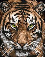 """Картина по номерам. """"Величественный тигр""""  40х50см БЕСПЛАТНАЯ ДОСТАВКА"""