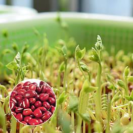 Вигна угловатая (фасоль угловатая, адзуки) для проращивания ростков 100 г