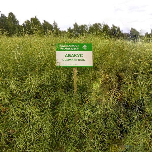 Семена озимого рапса Абакус «Лембке» (Lembke)