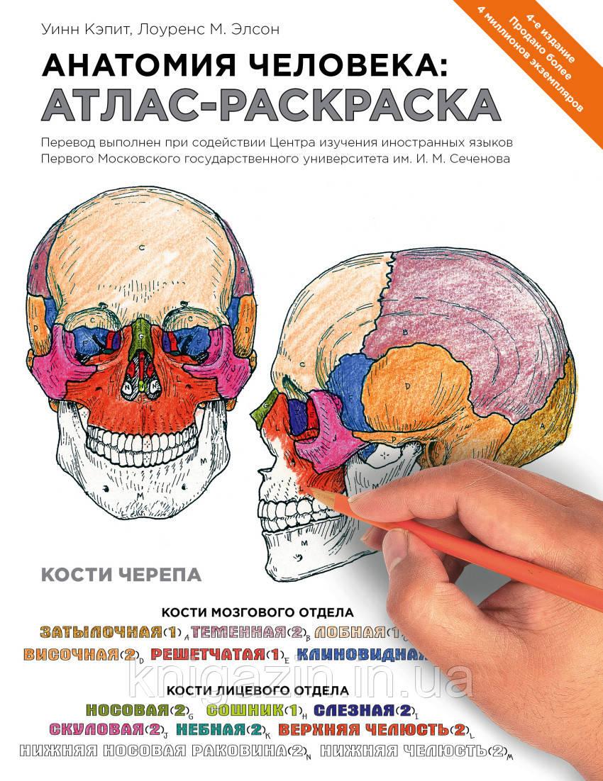 Книга Анатомия человека: атлас-раскраска