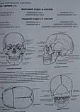 Книга Анатомия человека: атлас-раскраска, фото 3