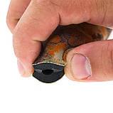 Гульфик Marlin неопреновий для гідрокостюма Brown (9 мм), фото 4