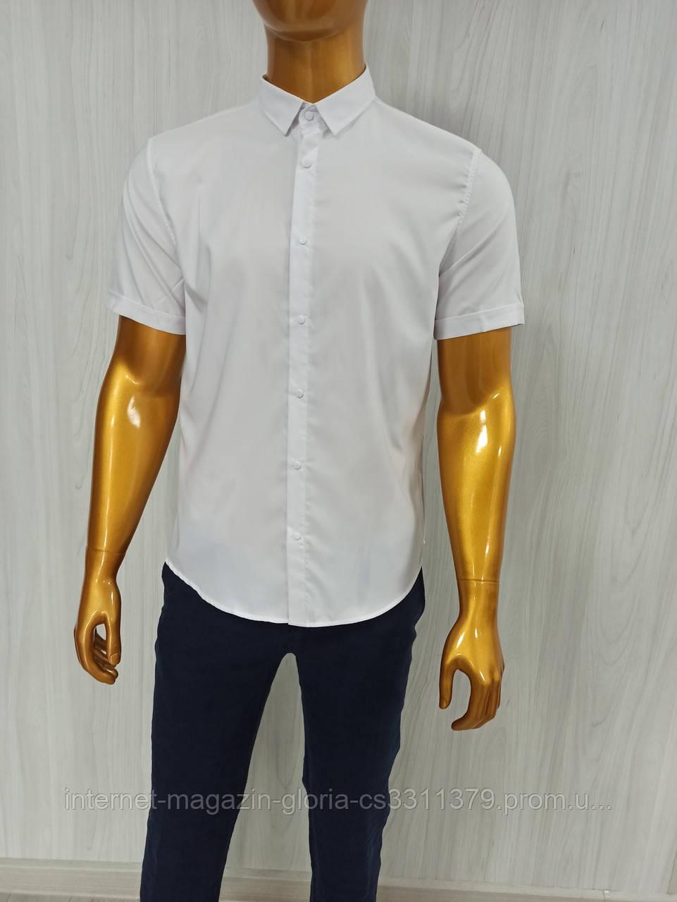 Мужская рубашка Amato. AG.18681-2. Размеры:M,L,XL(2), 2XL.