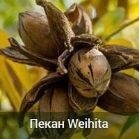 Саженцы ореха Пекан Weihita 3-х летний