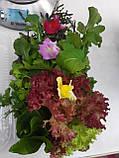 Набір салатів органічний Green for you, 130 г(доставка по Харкову), фото 3