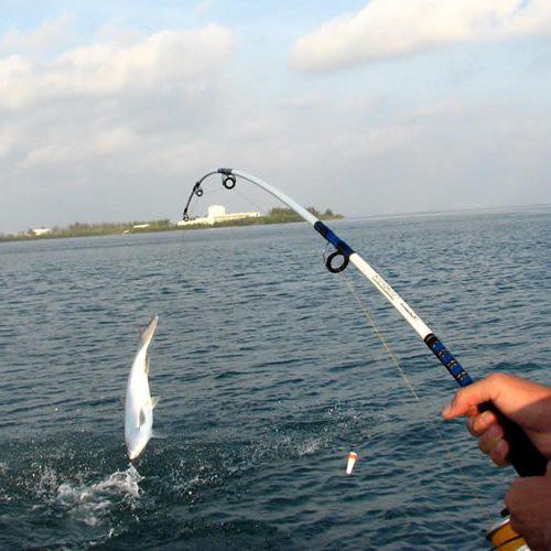 Прогноз клева рыбы в Украине 16, 17 и 18 октября.