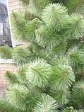 Сосна европейка, 1,5 м арт. СКУ, фото 2
