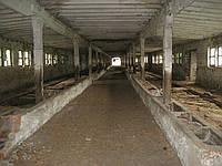 Продам 2 фермы с переходным блоком 20 км.от г.Чернигова с 2-8 га.земли,все коммуникации.