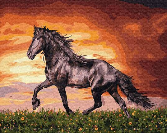 BK-GX34880 Картина для рисования по номерам Чёрный конь, Без коробки, фото 2