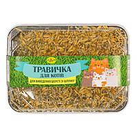 Травка для проращивания (ТМ Лори) для котов в контейнере 60 гр