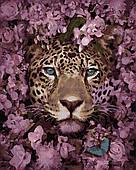 Картина за номерами Леопард в кольорах, кольоровий полотно на картоні, 40*50 см, без коробки