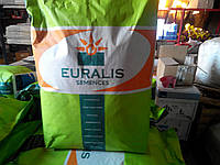 Насіння соняшнику Євраліс ЄС Шерпа, фото 1