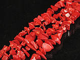 Крошка из красного коралла, 1,2м, фото 2