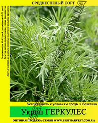 Семена укропа «Геркулес» 25 кг (мешок)