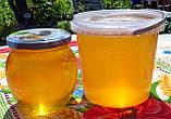 Натуральный акациевый мёд урожая 2020 года; доставим по Боярка, фото 3
