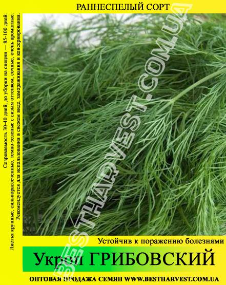 Семена укропа «Грибовский» 25 кг (мешок)
