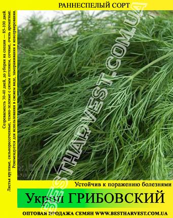 Семена укропа «Грибовский» 25 кг (мешок), фото 2