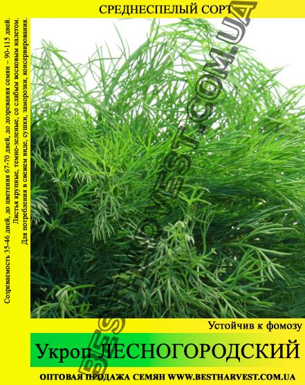 Семена укропа «Лесногородский» 25 кг (мешок)