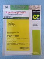 Рукола Тріція TRICIA, 100000 насінин