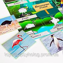 Гра на липучках «Екзотичні птахи»