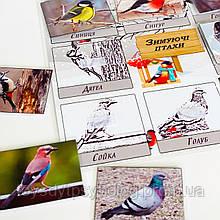Гра на липучках «Зимуючі птахи»