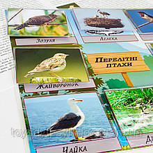 Гра на липучках «Перелітні птахи»