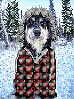 Собака . Зима . Схема вышивки бисером