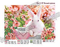 Білий кролик Схема вишивки бісером