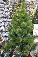 Штучна сосна Бьюті (арт. С002): огляд однієї з найпопулярніших новорічних ялинок!