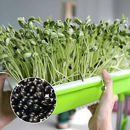 Чёрные соевые бобы для проращивания ростков 100 г