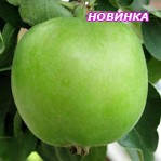 Саджанці яблуні Гринсливз