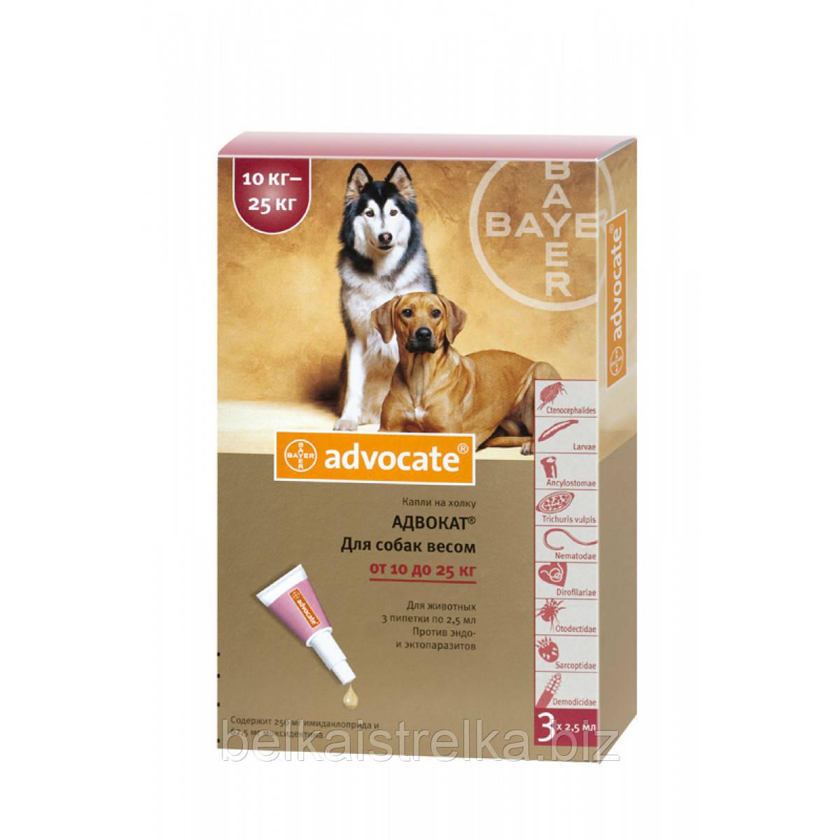 Капли Bayer Advocate Адвокат инсектицидные для собак весом 10 - 25 кг, 1 пипетка х2,5мл
