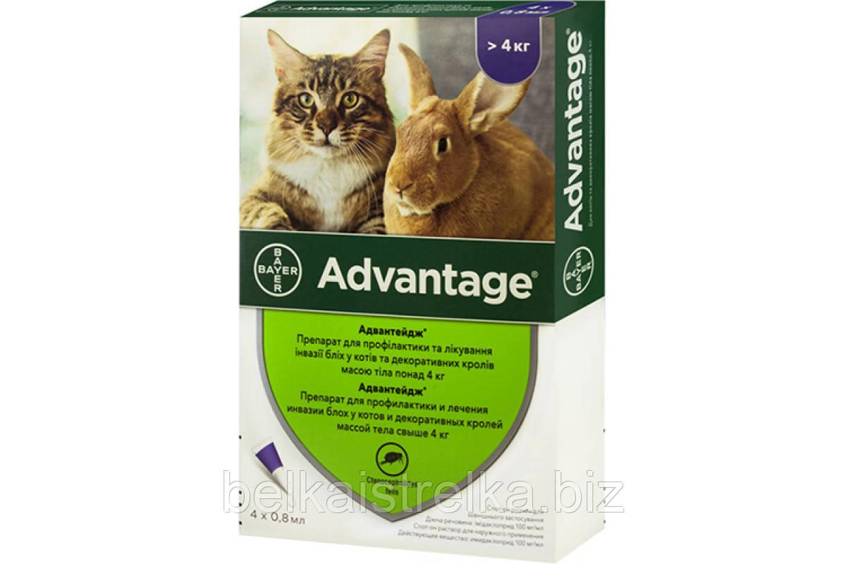 Капли Bayer Advantage Адвантэйдж  от блох для кошек от 4 кг, пипетка 0,8мл