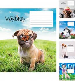 Тетрадь 12 листов линия Book of Wanders 2563(12л) Star Украина
