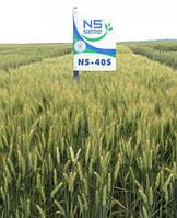 Озимая пшеница 1 репродукция НС 40С